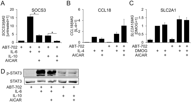 Stimulus specific regulation of transcriptional responses by AICAR. ( A ) mRNA Expression of SOCS3 in macrophages treated for 1 h with 20 ng/ml IL-6 or IL-10, 1 mM AICAR and 0.5 µM ABT-702. ( B ) mRNA Expression of CCL18 in macrophages treated for 24 h with 20 ng/ml IL-4, 1 mM AICAR and 0.5 µM ABT-702. ( C ) mRNA Expression of SLC2A1 in macrophages treated for 24 h with 1 mM DMOG, 1 mM AICAR, and 0.5 µM ABT-702. ( D ) Western blot analysis of STAT3 phosphorylation in macrophages treated for 1 h with 20 ng/ml IL-6 or IL-10, 1 mM AICAR and 0.5 µM ABT-702. *p