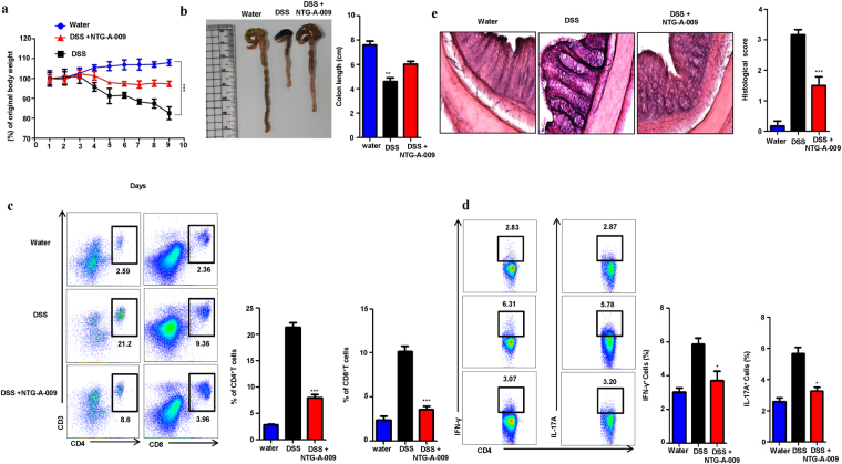 NTG-A-009 inhibits Th1 and Th17 cells in vivo and attenuate DSS induced colitis. C57BL/6 mice were orally administered with 2.5% (w/v) DSS in drinking water for 7 days to induce colitis. NTG-A-009 was orally administered every day (n = 6 mice in each group). ( a ) Body weight of water, DSS and NTG-A-009 treated mice was recorded daily and presented as percentage of original body weight. ( b ) Colon length of mice treated with water, DSS and NTG-A-009. ( c ) CD4 + and CD8 + T cells infiltration was detected from the Lymphocytes isolated from colonic lamina propria of water, DSS and NTG-A-009 treated group and analyzed by FACS. ( d ) The percentage of Th1 and Th17 cells was determined by the stimulation of splenocytes from each group with PMA, ionomycin and golgistop for 4 hour and analyzed by FACS through intracellular staining of IFN-γ and IL-17. ( e ) H E staining of colonic section with histological score (magnification 20X). Data represent three independent experiments. Two-way anova (A) or *P