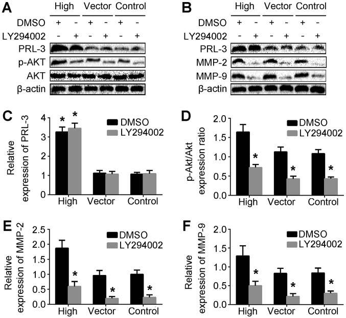p-AKT, MMP-2 and <t>MMP-9</t> are involved in PRL-3-mediated invasion and migration of gastric cancer cells. (A) Levels of PRL-3, AKT and p-AKT were analyzed in SGC7901 cells (control), SGC7901 cells transfected with empty vector, and plasmid SGC7901/EGFP-PRL-3 cells (high) by western blotting. (B) The expression of MMP-2 and MMP-9 were also analyzed by western blotting. (C) The relative expression of PRL-3 was quantified relative to β-actin. (D) The ratio of p-AKT/AKT was quantified relative to the control group. (E) The expression of MMP-2 was quantified relative to β-actin. (F) The expression of MMP-9 was quantified relative to β-actin. Each bar represents the mean ± standard deviation of 3 independent experiments. *P