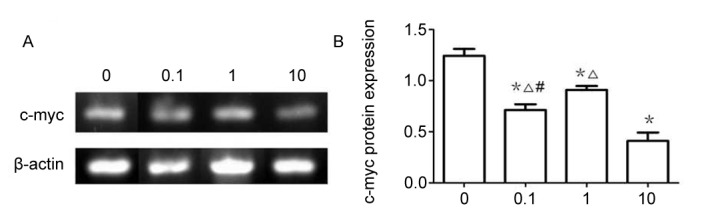 c-Myc mRNA expression at different XAV939 concentrations as detected by RT-sqPCR. (A) RT-PCR gel (B) and relative expression of β-catenin mRNA in A549 cells, treated with different XAV939 concentrations. *P