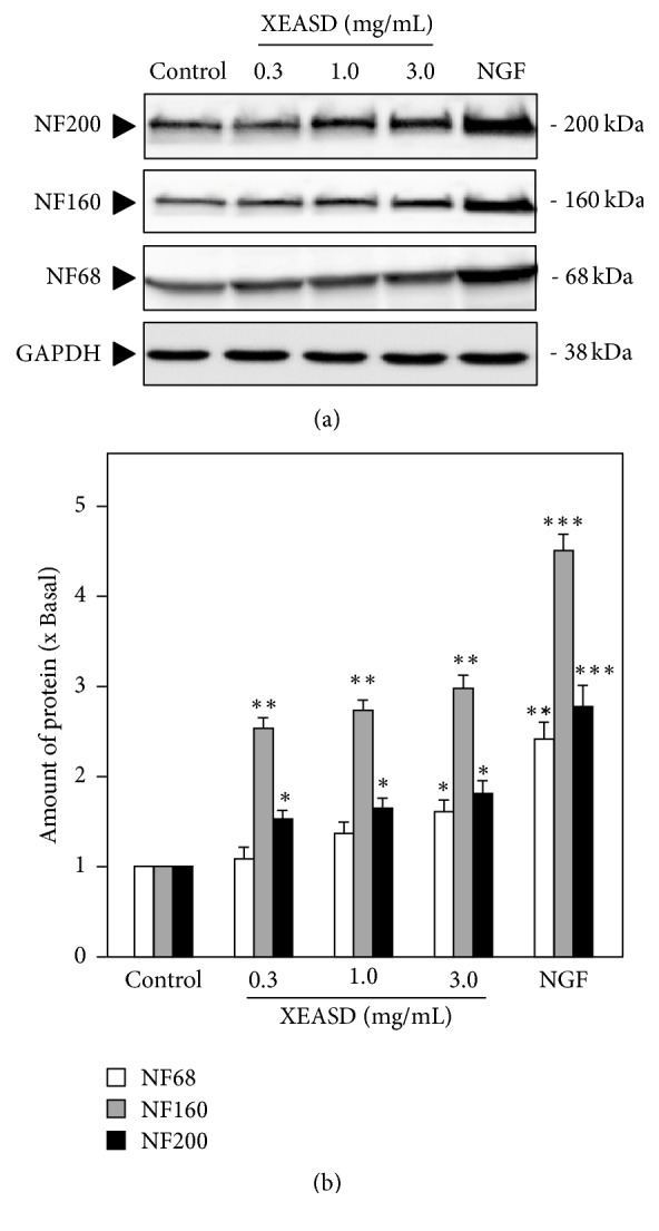 XEASD stimulates neurofilament expression of cultured PC12 cells. (a) XEASD extracts (0.3–3.0 mg/mL) were applied onto cultured PC12 cells for 48 hours. The cell lysates were collected to determine the expressions of NF68, NF160, and NF200. NGF (50 ng/mL) served as the positive control. GAPDH served as a loading control. (b) Quantification plot was shown in histograms. Values are expressed as the fold of increase to basal reading (untreated culture, set as 1). Mean ± SEM; n = 4. Statistical comparison was made with the control; ∗ p