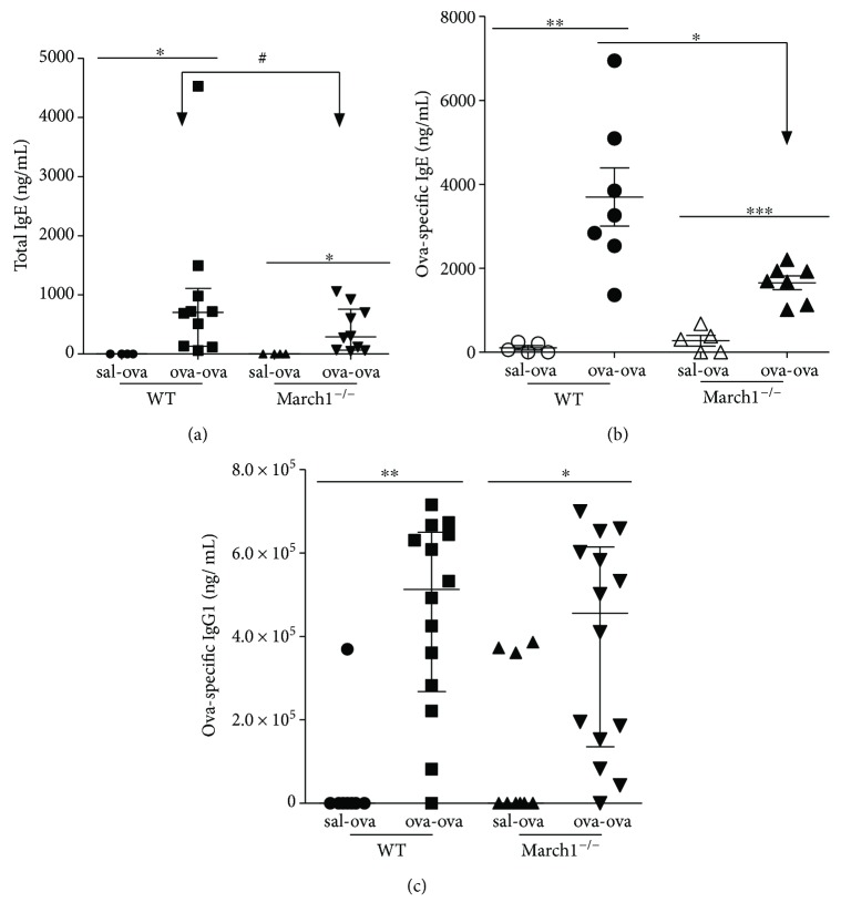 March1 deficiency leads to less antibody production against OVA in the ovalbumin-allergic model. Total IgE (a), OVA-specific IgE (b), and OVA-specific IgG 1 (c) were measured in the serum of WT and March1 −/− mice. ∗ p