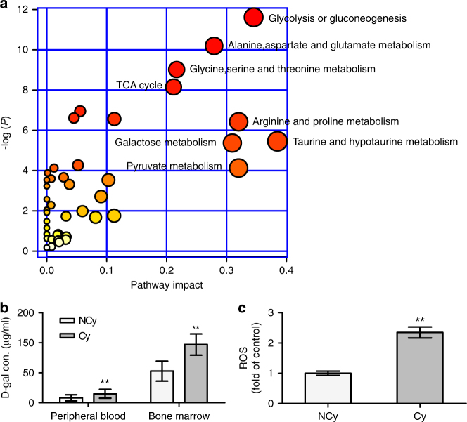 Profound hypoxia altered metabolic profiling in BM. a Pathway analysis of 49 metabolites identified as being present in the Cy group but not in the <t>NCy</t> group. x Axis represents the pathway impact, and y axis represents the pathway enrichment. Larger sizes and darker colours represent increased pathway enrichment and higher pathway impact values, respectively. b d -galactose concentrations in the peripheral blood ( n = 22 per group) and bone marrow ( n = 5 per group) of patients were analysed. c ROS levels of <t>BMSCs</t> from the NCy and Cy groups were analysed. The data shown are the mean ± SD from three independent experiments, and statistical significance was analysed using Student's t -test (** P