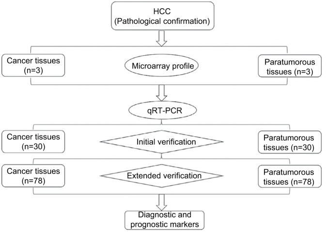 The detailed experimental process. Notes: circRNA expression profiles were screened in three paired human HCC and paratumorous tissues. Targeted circRNAs were verified by qRT-PCR via initial verification in 30 pairs of samples and extended verification in 78 pairs of samples. Abbreviations: circRNAs, circular RNAs; HCC, hepatocellular carcinoma; qRT-PCR, quantitative real-time polymerase chain reaction.