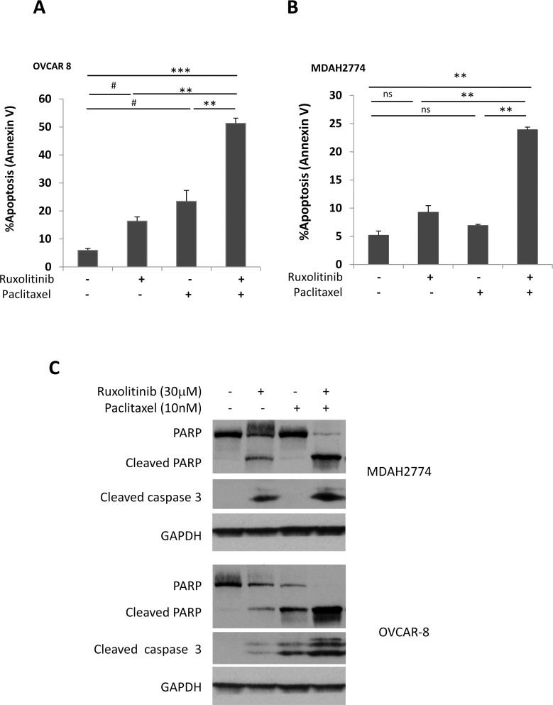 Ruxolitinib enhanced paclitaxel-induced apoptosis in human ovarian cancer cells (A) OVCAR-8 and (B) MDAH2774 cells were treated with ruxolitinib (30μM), paclitaxel (10nM) either alone or together, for 48 h. Apoptosis was determined by flow cytometry using annexin V and PI staining (A B) or by cleaved poly-ADP ribose polymerase (PARP) and cleaved caspase-3 by Western blot (C) . ns: not significant; # P