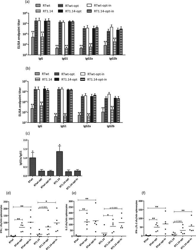 Immune responses following immunization with expression-optimized RT genes. BALB/c mice (n = 5 or 6) were immunized with two intradermal injections (29G needle) containing 20 µg of RTwt, RTwt-opt, RTwt-opt-in, RT1.14, RT1.14-opt, or RT1.14-opt-in encoding plasmids per mouse with subsequent electroporation by Dermavax (standard protocol) in two independent immunizations. At 21 days post-immunization mice were sacrificed, and sera and splenocytes were isolated for further immune tests. End-point average titers of anti-RT total IgG and IgG subtypes were detected using ELISA against recombinant RTwt and RT1.14 proteins with cut-offs set against the serum reactivity of control mice immunized with vector pVax 1. ( a – c ) ELISA with the identical RT protein variant received as a gene, i.e. recombinant RTwt protein for RTwt, RTwt-opt, and RTwt-opt-in immunized mice or RT1.14 for RT1.14, RT1.14-opt, and RT1.14-opt-in immunized mice. ( a ) ELISA with the homologous RT, i.e. recombinant RT1.14 protein for RTwt, RTwt-opt, and RTwt-opt-in or RTwt protein for RT1.14, RT1.14-opt, and RT1.14-opt-in immunized mice. ( b ) IgG2a/IgG1 ratio for antibody reactivity against RT variants matching RT used as DNA immunogen ( c ). In panels (a,b) the asterisk designates the difference between RTwt and RTwt-opt/RTwt-opt-in and between RT1.14 and RT1.14-opt/RT1.14-opt-in variants for all IgG subtypes. Murine splenocytes were stimulated in vitro with an RT-derived peptide representing the epitope of RT aa 528–543 (immunodominant T-cell epitope; Table 2 ) in the IFN-γ/IL-2 Fluorospot test ( d – f ). The average number of cells was registered as signal-forming units (sfu) per million splenocytes secreting IFN-γ ( d ) IL-2 ( e ) and IFN-γ/IL-2 ( f ) and the error bars represent the SD. *p
