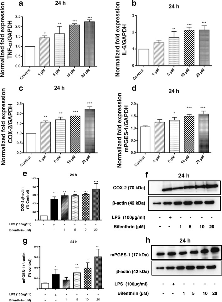 BF exposure increases the expression of pro-inflammatory markers in primary microglia cells. Microglial cells were exposed to different concentrations of BF (1–20 μM) for 24 h. Gene expression of TNF-alpha ( a ), IL-6 ( b ), COX-2 ( c ), and mPGES-1 ( d ) was analyzed by real-time quantitative PCR. GAPDH was used as an internal control for normalization, and data were quantified by using the comparative cycle threshold Ct method. Similarly, cells were treated with BF and thereafter incubated with or without LPS (100 ng/mL) as a positive control (black column) for 24 h. Whole cell lysates were subjected to Western blot for COX-2 ( e , f ), mPGES-1 ( g , h ), and beta-actin. To confirm equal sample loading, beta-actin was used for normalization. Data are presented as percentage control of DMSO. Statistical analyses were carried out by using one-way ANOVA followed by post hoc Student–Newman–Keuls test. Results are expressed as means ± SEM of three independent experiments. *p