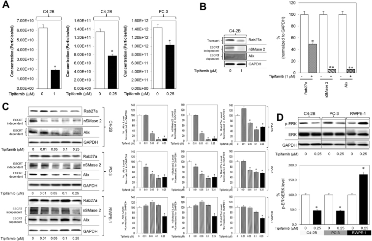Tipifarnib inhibits exosome biogenesis and secretion via both ESCRT dependent and independent pathways and disrupts RAS signaling. ( A ) C4-2B and PC-3 cells were maintained overnight in exosome free DMEM media and then treated with tipifarnib or DMSO (vehicle control) for 48 hours. The concentration of exosomes was measured by the qNano IZON. Tipifarnib shows a significant decrease in the concentration of exosomes in C4-2B cells both at 0.25 and 1 μM as well as in the PC-3 cells at 0.25 μM. ( B ) Tipifarnib at a 1 μM concentration significantly inhibited the protein concentration of Alix, nSMase2, and Rab27a in C4-2B cells. Full blots are presented in Supplementary Fig. S6 . ( C ) Tipifarnib significantly inhibited the protein concentration of Alix, nSMase2, and Rab27a in a dose-dependent manner in C4-2B and PC-3 cells but not in the normal <t>RWPE-1</t> cells. Full blots are presented in Supplementary Fig. S6 . ( D ) Tipifarnib significantly inhibited the activation of p-ERK (downstream effector molecule of the Ras/Raf/ERK signaling pathway) but not total ERK in C4-2B and PC-3 cells but not in the normal RWPE-1 cells. Full blots are presented in Supplementary Fig. S6 . Mean values and standard errors were derived from four independent experiments. *Denotes significance at p