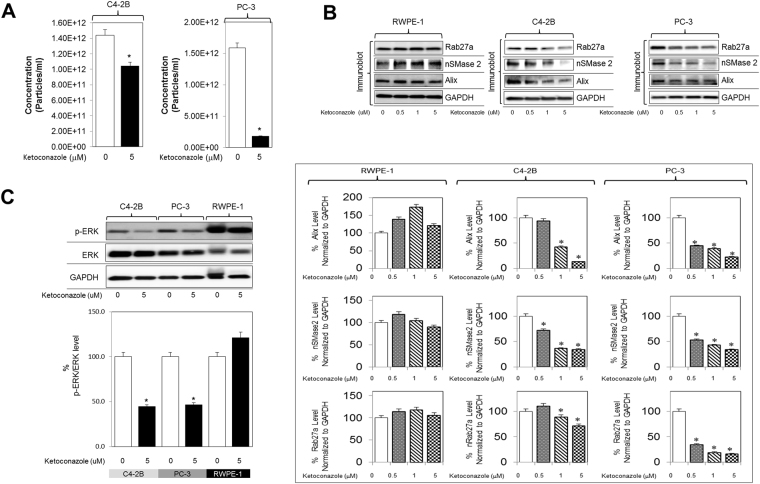 Ketoconazole (prototype imidazole) inhibits exosome biogenesis through ESCRT dependent and independent pathway. ( A ) C4-2B and PC-3 cells were maintained overnight in exosome free DMEM media and then treated with ketoconazole or DMSO (vehicle control) for 48 hours at 5 μM. Concentration of exosomes was measured by qNano IZON. Ketoconazole shows a significant decrease in the concentration of exosomes in C4-2B cells at 5 μM as well as in the PC-3 cells ( B ) Ketoconazole significantly inhibited the protein concentration of Alix, nSMase2 and Rab27a in a dose-dependent manner in C4-2B and PC-3 cells but not in the normal RWPE-1 cells. Full blots are presented in Supplementary Fig. S6 . ( C ) Ketoconazole significantly inhibited activation p-ERK (downstream effector molecule of the Ras/Raf/ERK signaling pathway) but not total ERK in C4-2B, and PC-3 cells, but not in the RWPE-1 cells. Full blots are presented in Supplementary Fig. S6 . Mean values and standard errors were derived from four independent experiments. *Denotes significance at p