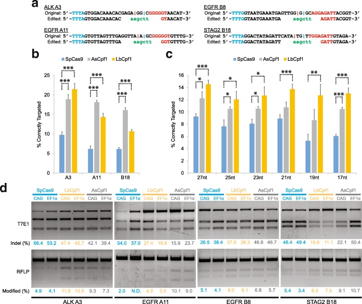 Evaluation of various CRISPR-Cas systems in HDR-mediated genome editing using symmetric ssODN donor templates and perfectly matched spacers. a Intended DNA changes at the A3 (in ALK), A11 (in EGFR), B8 (in EGFR), and B18 (in STAG2) target sites. Each red vertical line indicates the cleavage site of Cas9 nucleases, which occurs 3 bp upstream of their PAM. Each blue vertical line indicates the cleavage site of Cpf1 nucleases on one DNA strand, which occurs 18 nt downstream of their PAM. The HindIII restriction site is indicated in green . b Extent of correctly incorporating the HindIII recognition sequence into the A3, A11, or B18 target locus. Donor ssODNs with 27-nt homology arm lengths were used. The donor templates were complementary to the target DNA strand. Cells were harvested for deep sequencing analysis 72 h post-transfection. Both the Cpf1 endonucleases consistently exhibited higher levels of precise gene targeting than SpCas9. Data represent mean ± standard error of the mean (s.e.m.; n ≥ 5). *** P