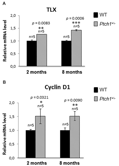 Shh pathway activation induces DG cells proliferation by increasing TLX and Cyclin D1 expression. (A) TLX mRNA relative expression in Ptch1 +/− mice at 2 and 8 months of age. (B) Cyclin D1 relative expression in Ptch1 +/− mice at 2 and 8 months. The number of mice used per test is indicated in the graphs (n). Data are reported as mean ± SEM * p