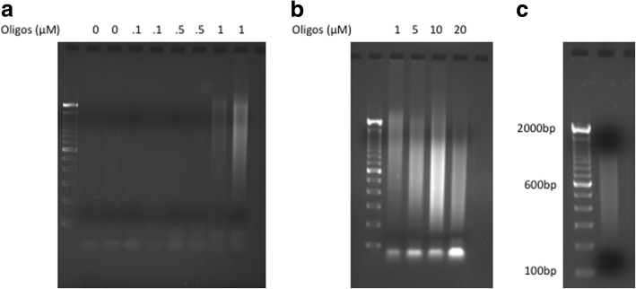 Drosophila sequencing library. a and b Agarose gel (2%) demonstrating the PCR products from surface tagmentation, various amount of acrydite oligonucleotides were used when casting the poly-acrylamide gel. c Agarose gel (2%) demonstrating the sequencing library after surface tagmentation and 16 cycles of PCR. The sequencing library was size selected with <t>Agencourt</t> <t>Ampure</t> XP beads