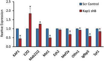 Validation of the specificity of the KAP 1 regulated gene set N2A cells were transfected with an additional Kap1 targeting shRNA expression vector shB‐Kap1 or a scrambled control plasmid. Three days later, cells were harvested and expression of the indicated KAP1 targets analysed using RT–qPCR. Samples were normalised using Gapdh, and the results are presented relative to the control. Results are presented as mean values ± SEM, N = 3; * P