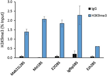 Paupar‐ KAP 1– PAX 6 bound sequences within the regulatory regions of the Mab21L2 , Mst1 , E2f2, Igfbp5 and Ezh2 genes are enriched in H3K9me3 modified chromatin ChIP assays were performed in N2A cells using either histone H3K9me3 or anti‐rabbit IgG control antibody. DNA fragments were amplified using qPCR. % input was calculated as 100 × 2 ( C t Input − C t IP ) . Results are presented as mean values ± SEM, N = 4.