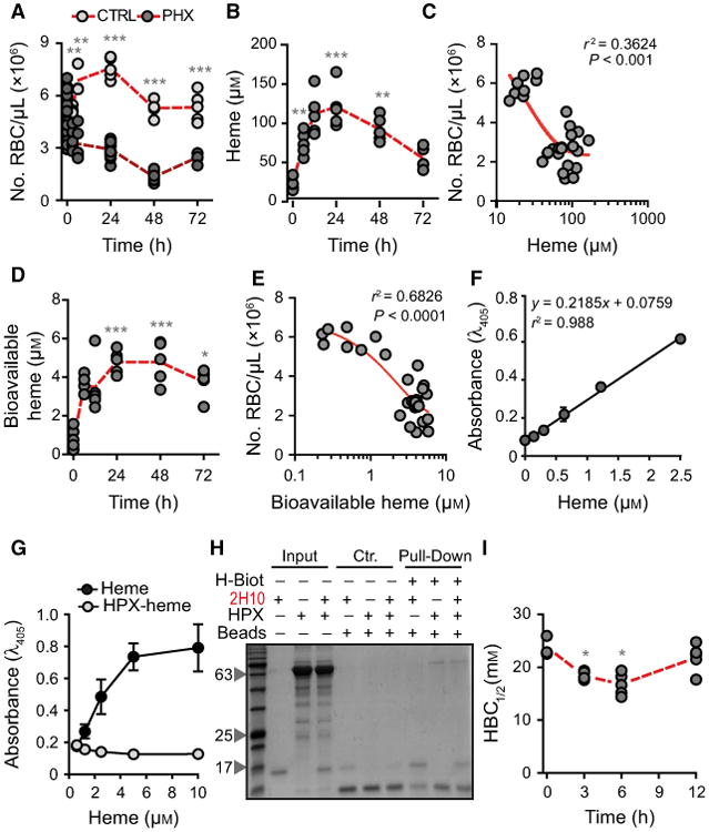 Characterization of labile heme in plasma following acute hemolysis. (A) Number of RBC in C57BL/6 mice receiving Phenylhydrazine (PHX) and control (CTRL) mice receiving PBS. (B) Heme concentration in the plasma of C57BL/6 mice receiving phenylhydrazine. (C) Correlation between circulating RBC numbers (data from A) and heme concentration in plasma (data from B). (D) Concentration of bioavailable heme in plasma of C57BL/6 mice receiving phenylhydrazine, quantified by a heme reporter assay [ 31 ]. (E) Correlation between circulating RBC numbers (data from A) and concentration of bioavailable heme in plasma (data from D). (F) Soluble hemin quantified by a sandwich ELISA in which the sdAbs 1A6 and 2H7 are used to capture and reveal heme, respectively. (G) Detection of soluble heme versus heme bound to HPX using the same sdAb-based ELISA as in (F). Note that heme bound to HPX is not detected by ELISA. (H) A pull-down assay using streptavidin-beads to capture heme-biotin. The sdAb 2H10 bound to heme-biotin was added to HPX at 1/6 SdAb/HPX molar ratio. Streptavidin-beads pulled down the sdAb 2H10 as well as HPX bound to heme-biotin, demonstrating that HPX can bind heme-bound to sdAb 2H10. This is consistent with the higher affinity of HPX toward heme as compared to the sdAb 2H10. Coomassie-based stain of 15% SDS/PAGE gel loaded with streptavidin-beads used to pull-down heme-biotin from different reaction mixtures. Grey arrowheads indicate the molecular weight of the protein ladder (NZYColour Protein Marker II, Nzytech ® ) in kDa loaded in the first lane of the gel. Gel is representative of two independent experiments with similar trend. (I) Plasma HBC 1/2 in C57BL/6 mice receiving phenylhydrazine. Circles in A, B, C, D, E, and I correspond to individual mice. Red dash line represents mean ± STD. * P