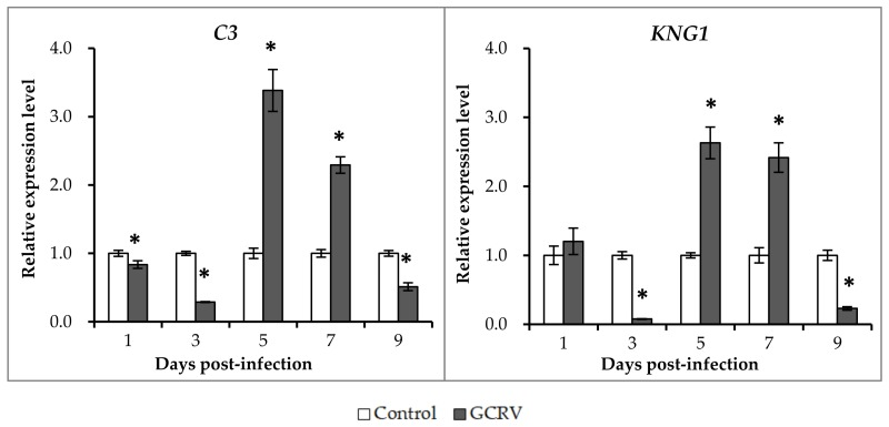 qRT-PCR analysis of the expression levels of C3 and KNG1 after GCRV infection. The relative expression levels of the genes were calculated as the ratio of gene expression level in GCRV infected group relative to that in the control group at the same time-point. All data represent the mean ± standard deviation of three replicates ( n = 5 for each biological duplicate). Significant difference ( p