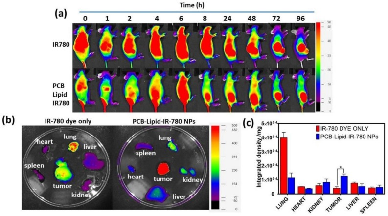Biodistribution of PCB-lipid–IR-780 NPs in a TC-1 xenograft tumor model. ( a ) NIR fluorescent image of PCB-lipid–IR-780 NPs injected into TC-1 tumor mice at different time points; ( b ) ex vivo NIR fluorescent images of the organs isolated from IR-780 and PCB-lipid–IR-780-NP-treated TC-1 tumor-bearing mice at 48 h postinjection; and ( c ) integrated density plot of the excised organs from IR-780 and PCB-lipid–IR-780-NP-treated TC-1 tumor-bearing mice. n = 4, SEM, * p ≤ 0.05.