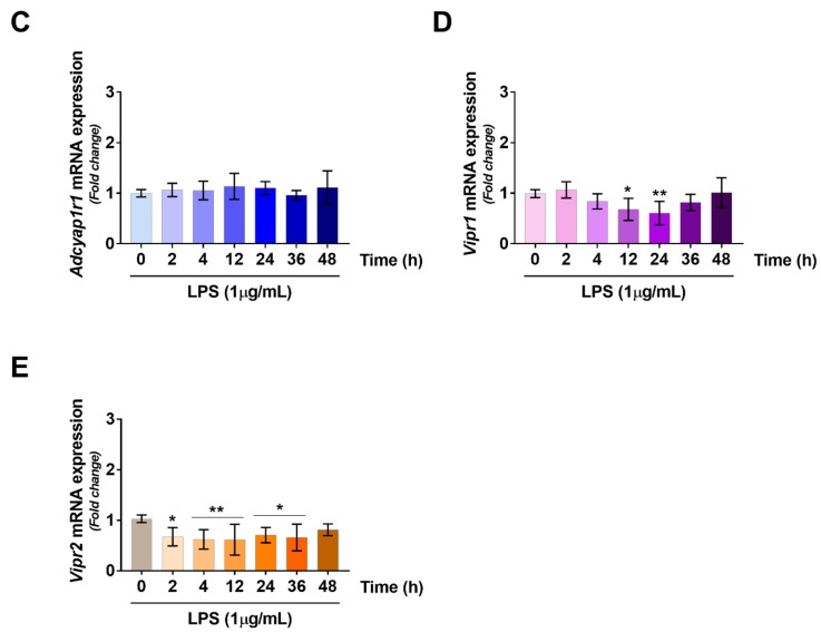 Time-course gene expression profiling of ( A ) Vip ; ( B ) Adcyap1 ; ( C ) <t>Adcyap1r1</t> ; ( D ) Vipr1 and ( E ) Vipr2 mRNAs in RT4 SCs treated with LPS at the indicated concentration. Relative transcript levels were measured by quantitative real-time PCR analyses. Amplifications were performed using selected primers optimized for qPCR analyses (