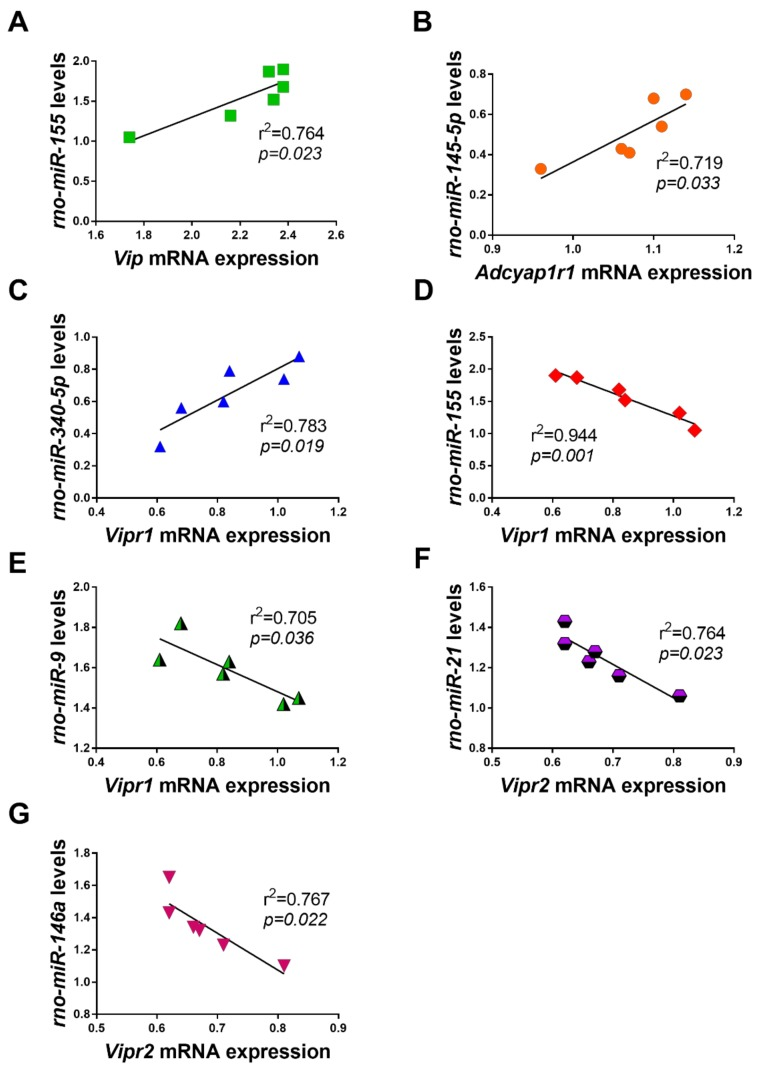 Scatterplots and regression lines showing the relationship between dysregulated miRNAs and the expression profile of VIP/PACAP system components following exposure to LPS. Only significant correlations are shown. Positive correlations were found between ( A ) rno-miR-155 and Vip ; ( B ) rno-miR-145-5p and Adcyap1r1 and ( C ) rno-miR-340-5p and Vipr1 mRNAs. Inverse relationships were found between ( D ) rno-miR-155 and Vipr1 ; ( E ) rno-miR-29a and Vipr1 ; ( F ) rno-miR-21 and Vipr2 and ( G ) rno-miR-146a and Vipr2 . Coefficients of determination ( r 2 ) and related p values are shown in each panel.