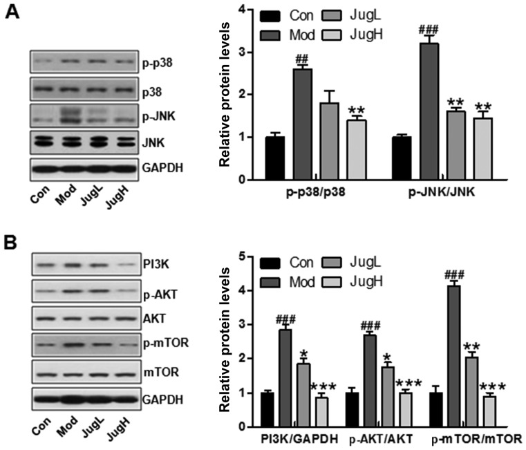 Effects of juglanin on UVB-induced p38/JNK and <t>PI3K/AKT</t> signaling activity. Western blotting was conducted and relative protein expression levels of (A) p-p38 and p-JNK, and (B) PI3K, p-AKT and p-mTOR were determined. Data are presented as the means ± standard deviation of three independent experiments. ## P