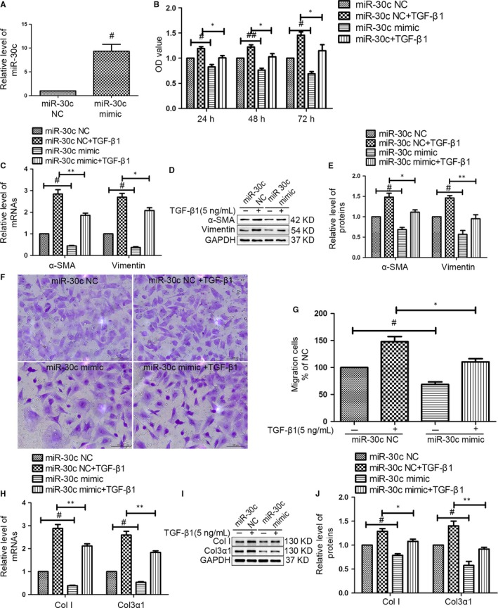 MiR‐30c exhibited an anti‐fibrotic effect on CF s. (A) CF s were transfected with a miR‐30c mimic or miR‐30c negative control ( NC ) for 72 hours. NC was used as a mimic negative control. The level of miR‐30c was increased in CF s transfected with miR‐30c mimic by qRT ‐ PCR . # P