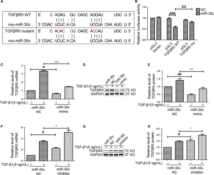 MiR‐30c targets TGF β RII . (A) Diagram of miR‐30c binding site in TGF β RII 3′ UTR . TGF β RII 3′ UTR mutant was constructed to evaluate miR‐30c binding. (B) After 293T cell cotransfection, luciferase activity was measured using a Dual Luciferase Report Assay Kit. The luciferase activity was significantly decreased in TGF β RII ‐ WT + miR‐30c group compared with that in TGF β RII ‐ WT + miR‐30c NC and TGF β RII ‐mu + miR‐30c. ### P