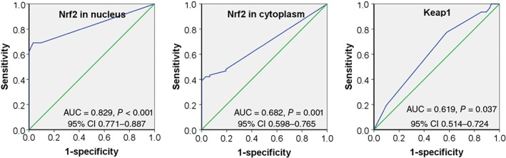 Receiver operating characteristic curve for prediction of esophageal squamous cell carcinoma using immunohistochemical Q scores of Nrf2 and Keap1. The area under the curves (AUC) of nuclear Nrf2, cytoplasmic Nrf2, and Keap1 Q scores were 0.829, 0.682, and 0.619, respectively. CI, confidence interval.