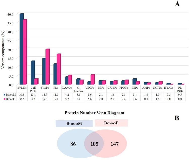 Distribution of protein classes in venom from male (BmooM) and female (BmooF) B. moojeni snakes determined by shotgun-proteomics. ( A ) Relative distribution of protein classes in BmooM and BmooF venom. AMPs: antimicrobial peptides, BPPs: bradykinin-potentiating peptides, Cell Prots: cellular proteins, C-Lectins: C-type lectins, CRISPs: cysteine-rich secretory proteins, HYALs: hyaluronidases, LAAOs: L-amino acid oxidases, NCTDs: nucleotidases, PEPs: peptidases, PLs: phospholipases, PL INBs: phospholipase inhibitors, PPDTs: phosphodiesterases, SVMPs: snake venom metalloproteinases, SVSPs: snake venom serine proteases, VEGFs: vascular endothelial growth factors; ( B ) Venn diagram with the proteins identified by mass spectrometry.