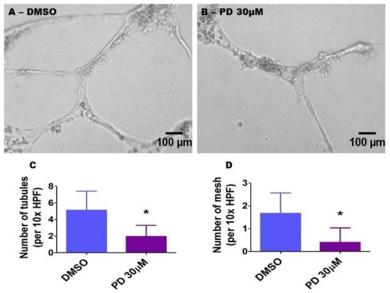 Suppression of ERK1/2 activity decreases HPAEC tubule and mesh formation. HPAECs were pre-treated with dimethylsulfoxide (DMSO) or 30 µM PD98059 (PD 30) for 30 min before being loaded on growth factor-reduced Matrigel (BD Bioscience) in 96-well plates. Following an incubation period of 18 h, tubule formation was quantified. ( A , B ) Representative photographs showing tubule formation in growth factor-reduced Matrigel. ( C , D ) Quantitative analysis of tubule ( C ) and mesh ( D ) formation. The values are presented as mean ± SD ( n = 9/group). Significant differences between DMSO- and PD-treated cells are indicated by * p