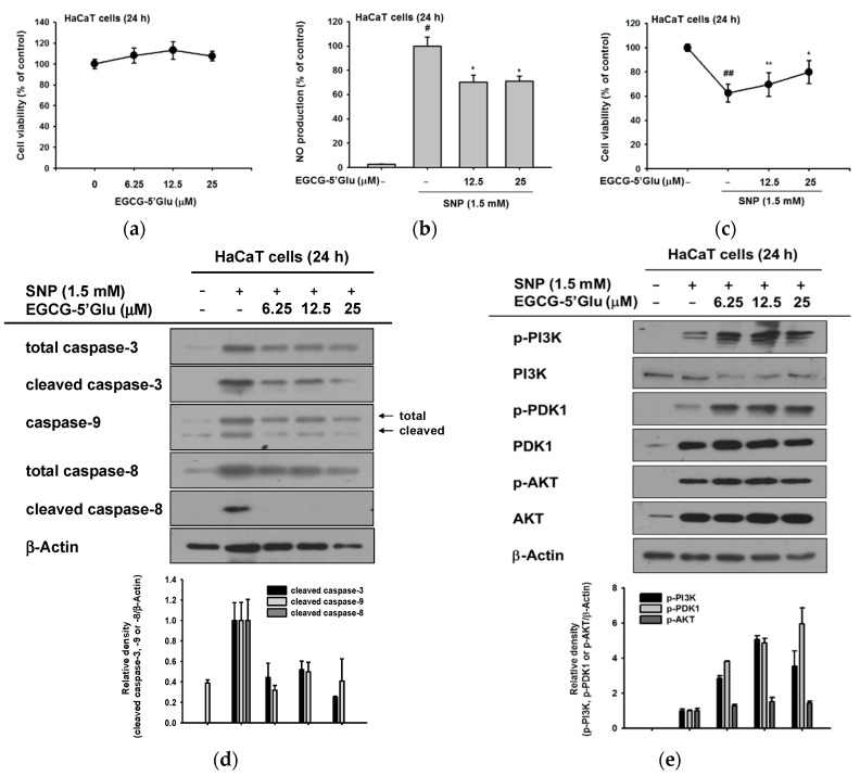 Anti-apoptotic effect of EGCG-5′Glu under SNP-induced apoptosis. ( a ) EGCG-5′Glu was applied to HaCaT cells for 24 h. Cell viability was tested by MTT assay. ( b ) EGCG-5′Glu was pre-treated on RAW264.7 cells for 30 min, and SNP (1.5 mM) was added for 24 h. SNP-derived NO was measured by Griess assay. ( c ) Under SNP treatment, cell viability of HaCaT cells with or without EGCG-5′Glu was identified by MTT assay. ( d ) Caspase levels of EGCG-5′Glu and SNP-treated HaCaT cells were analyzed by immunoblotting. Antibodies against total or cleaved caspase-3, -8, and -9 and β-actin were used. ( e ) Phosphorylated levels of PI3K, PDK1, and AKT in EGCG-5′Glu- and SNP-treated HaCaT cells were analyzed by immunoblotting. Antibodies against phospho- or total forms PI3K, PDK1, AKT, and β-actin were used. # p