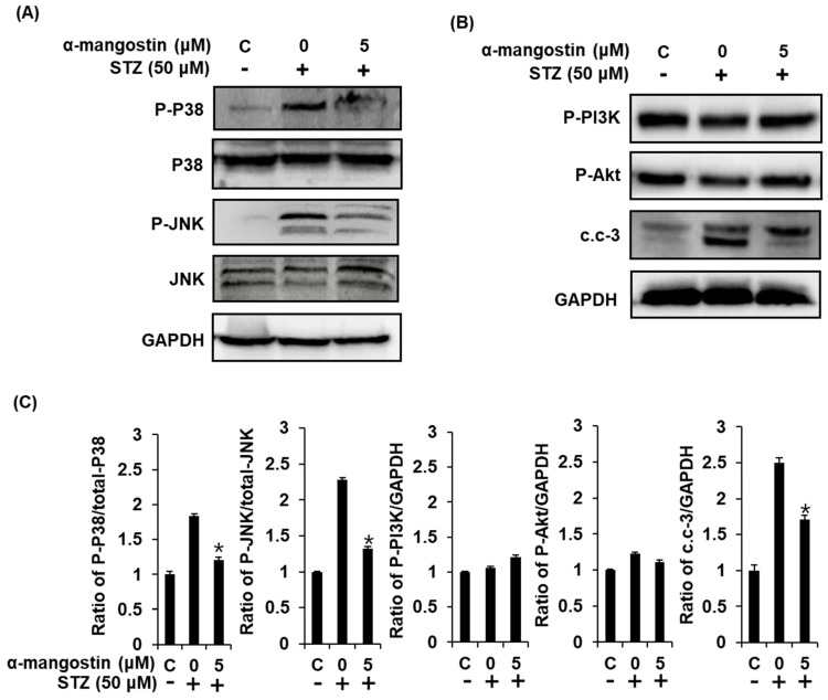 Effect of α-mangostin on MAPKs, PI3K/Akt, and cleaved caspase-3 (c.c-3) in INS-1 cells. ( A ) Protein expression levels of P-P38, P38, P-JNK, JNK, and GAPDH in INS-1 cells treated or untreated with STZ and 5 μM α-mangostin for 24 h. ( B ) Protein expression levels of P-PI3K, P-Akt, cleaved caspase-3, and GAPDH in INS-1 cells treated or untreated with STZ and 5 μM α-mangostin for 24 h. ( C ) Each bar graphs present the densitometric quantification results of Western blot bands. * p