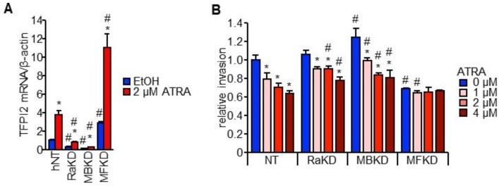 Effect of RARα, MAFB, and MAFF on HuH7 cell invasion through TFPI2. ( A ) TFPI2 mRNA expression in HuH7 cells stably transfected with shNT, shRARα, shMAFB, or shMAFF (NT, RaKD, MBKD, and MFKD cells, respectively). The cells were treated with EtOH (blue) or 2 µM ATRA (red) for 12 h ( n = 4). * p
