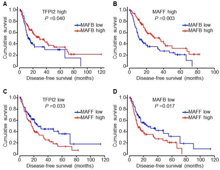 Kaplan–Meier analyses of disease-free survival of HCC patients from the TCGA cohort. ( A , B ) Disease-free survival curves of patients with lower (blue) or higher (red) MAFB expression in HCC with higher TFPI2 ( n = 68 or n = 93, respectively) ( A ) or higher MAFF ( n = 83 or 70, respectively) ( B ) groups, ( C , D ) Disease-free survival curves of patients with lower (blue) or higher (red) MAFF expression in HCC with lower TFPI2 ( n = 94 or n = 62, respectively) ( C ) or lower MAFB ( n = 73 or n = 83, respectively) ( D ) groups. P values shown were calculated by log-rank test. Median values of gene expression were used to divide the patients into the higher or lower groups.