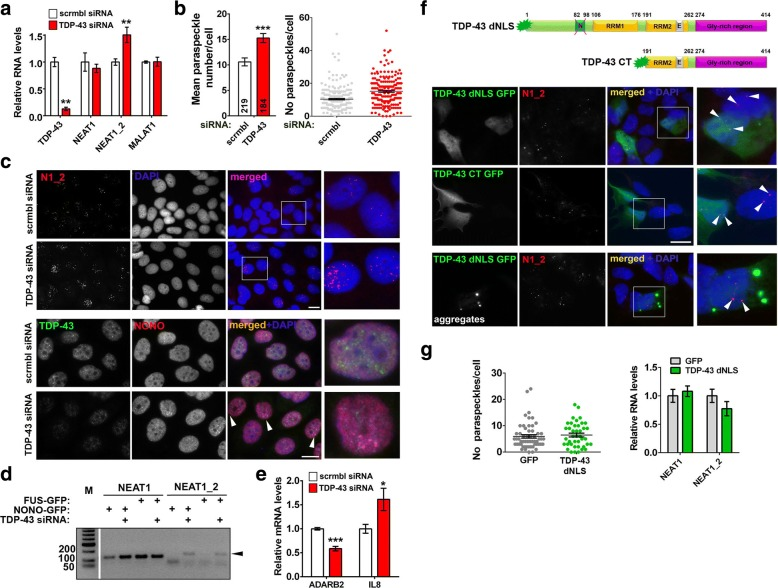 TDP-43 depletion but not its cytoplasmic accumulation or aggregation stimulates paraspeckle assembly in stable cell lines. a TDP-43 siRNA-mediated knockdown upregulates NEAT1_2. MCF7 cells were transfected with scrambled or TDP-43 siRNA and analysed 48 h post-transfection by qRT-PCR (n = 6). ** p