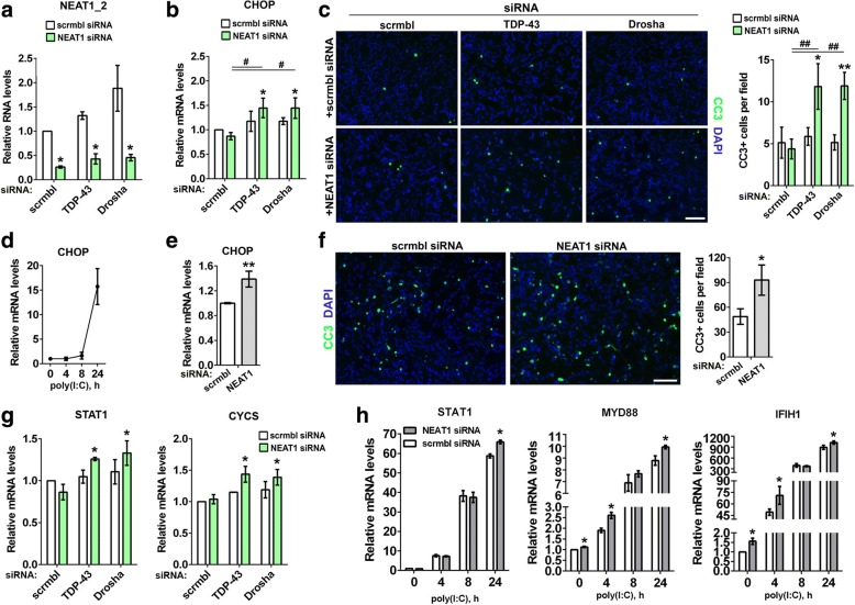 Loss of paraspeckles promotes apoptosis in cells with disturbed miRNA biogenesis and activated dsRNA response. a-c Disruption of paraspeckles in cells with downregulated TDP-43 or Drosha promotes apoptotic death in neuroblastoma cells. Efficiency of NEAT1_2 knockdown and levels of a proapototic protein CHOP mRNA were analysed by qRT-PCR (n = 3). * and # p ≤ 0.05 (Mann-Whitney U -test) ( a and b ). In c , representative images and quantification of cleaved caspase 3 (CC3) positive cells are shown. *p