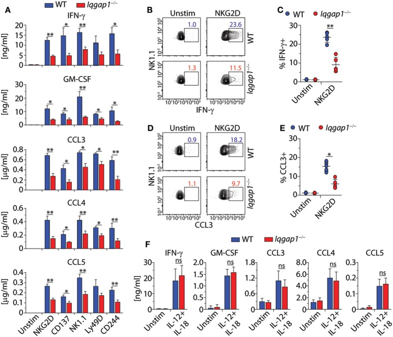 IQ domain-containing GTPase-activating protein 1 (IQGAP1) regulates inflammatory cytokine production in natural killer (NK) cells. (A) Cytokine (IFN-γ and GM-CSF) and chemokine (CCL3, CCL4, and CCL5) production by wild-type (WT) and Iqgap1 −/− NK cells were assessed 18–21 h post-NKR stimulation (2 µg/ml) by BioPlex mouse cytokine assay. (B,C) Intracellular IFN-γ and (D,E) CCL3 accumulation was evaluated by flow cytometry 12-h post-NKG2D stimulation (2 µg/ml), and the data are quantified as percent positive NK cells (CD3ε − NK1.1 + ). (F) Cytokine and chemokine production by WT and Iqgap1 −/− NK cells was assessed 18–21 after the addition of IL-12 (1 ng/ml) and IL-18 (10 ng/ml) by BioPlex mouse cytokine assay. Error bars represent SEM (A,F) or SD (C,E) using five to eight mice in at least two independent experiments, * p