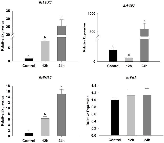 Relative expression levels of SA marker ( BrBGL2 and BrPR1 ) and JA marker ( BrLOX2 and BrVSP2 ) genes in β-ocimene-treated and control Chinese cabbages. OT, β-ocimene treated Chinese cabbage. Different letters over the bars designate a significant difference at P