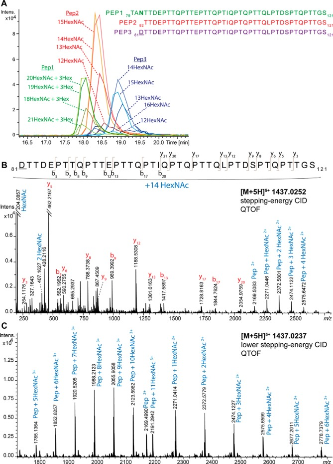 C18-PGC-LC-ESI-QTOF-MS/MS analysis of Pronase-generated O -glycopeptides with multiple glycosylation sites after PNGase F N -glycan release and exoglycosidase treatment with sialidase and galactosidase. A , Extracted ion chromatograms of three different glycopeptide clusters spanning from Thr79 to Ser121 with different glycan compositions attached. Pep1 = 79 TANTTDEPTTQPTTEPTTQPTIQPTQPTTQLPTDSPTQPTTGS 121 ; Pep2 = 82 TTDEPTTQPTTEPTTQPTIQPTQPTTQLPTDSPTQPTTGS 121 ; Pep3 = 81 D TTDEPTTQPTTEPTTQPTIQPTQPTTQLPTDSPTQPTTGS 121 ( D indicates the deamidated Asn caused by PNGase F treatment) B , Stepping-energy CID spectrum of Pep3 with 14 HexNAc residues, indicating up to 14 occupied O -glycosylation sites. C , Stepping-energy CID spectrum of the same glycopeptide as in panel B using lower-energy stepping-energy CID (stepping energy is set to 60 and 80% each half of the time (instead of 80–140%) with a focus on the glycan-derived Y-ions.