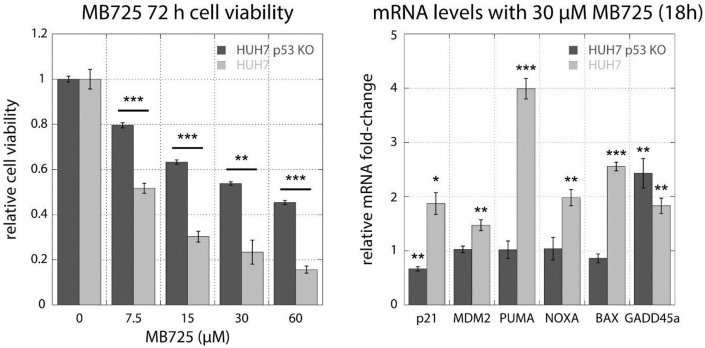 Assessment of p53-Y220C dependent effect of MB725 . Treatment of HUH-7 (p53-Y220C) and HUH-7 p53-Y220C KO cell lines with MB725 for 72 h underscores the enhanced cytotoxicity of MB725 in the presence of p53-Y220C (left panel). Additionally, p53-target genes were more potently upregulated in the p53-Y220C containing HUH-7 cell line than in the HUH-7 p53-Y220C KO cell line (right panel). These results demonstrate that the anticancer activity of MB725 depends at least partially on p53-Y220C. Cell viability was measured in quadruplicate and normalized against the values of blank (viability = 1) and no cell (viability = 0) controls (left panel). Data are shown as mean ± SEM (Unpaired t -test to test for significance in HUH7 and HUH7 p53 KO viability reduction; *p