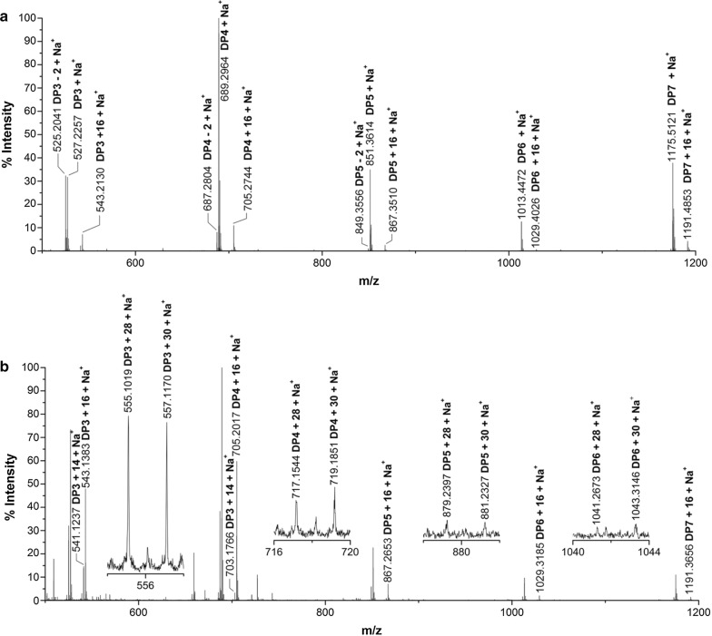 Identification of CtPMO1 reaction products oxidized by Br 2 with celloheptaose as substrate using MALDI-TOF–MS. Reaction products upon incubation of 0.1% celloheptaose with CtPMO1 in 10 mM HAc-NH 4 Ac (pH 5.0) and 1 mM ascorbate at 50 °C for 48 h. Reaction products ( a ) and reaction products oxidized by Br 2 ( b ). C1-oxidized oligosaccharides ( m/z + 16), C4- or C6-oxidized oligosaccharides ( m/z − 2), C4- and C1-oxidized oligosaccharides ( m/z + 14), C6- and C1-oxidized oligosaccharides ( m/z + 30), and C1-, C6- and C4-oxidized oligosaccharides ( m/z + 28)