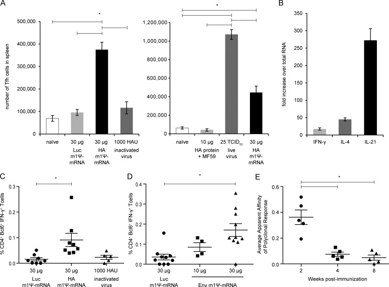 Potent Tfh cell responses are elicited by a single immunization with m1Ψ-mRNA-LNPs in mice. Mice were immunized once i.d. with 30 µg of Luc or HA m1Ψ-mRNA-LNPs, a single i.m. injection with 1,000 HAU of inactivated PR8 virus, MF59-adjuvanted recombinant PR8 HA protein, or intranasally infected with 25 TCID 50 of live PR8 influenza virus, and immune responses were examined 10 d after immunization (A and B). (A) Total numbers of splenic Tfh cells were determined by staining for TCR + CD19 − CD4 + CD62L − CXCR5 + PD-1 + T cells. (B) IFN-γ, IL-4, and IL-21 transcript levels in sorted Tfh cells from PR8 HA m1Ψ-mRNA-LNP–immunized mice were determined by quantitative real-time RT-PCR. Fold induction of cytokines compared with total universal RNA is shown. (C and D) Mice were immunized with a single i.d. injection of 30 µg of HA or Env m1Ψ-mRNA-LNPs, and immune responses were examined 12 d after immunization. Percentage of IFN-γ producing CD4 + Bcl-6 + Tfh-like cells was measured by flow cytometry after HA (C) or Env (D) peptide stimulation. (E) Mice were immunized with a single i.d. injection of 30 µg of PR8 HA m1Ψ-mRNA-LNPs, and rates of binding to PR8 HA were examined 2, 4, and 8 wk later by biolayer interferometry. The apparent nanomolar affinity of anti–HA antibodies, derived from the mean rates of HA-binding in polyclonal sera, is plotted for each serum sample, with lower values corresponding to higher apparent affinity. n = 5–8 mice, and each symbol represents values for one animal. Experiments were repeated at least two times to achieve sufficient numbers of values for mice in each group. Error bars are SEM. Statistical analysis: one-way ANOVA with Bonferroni correction, *, P