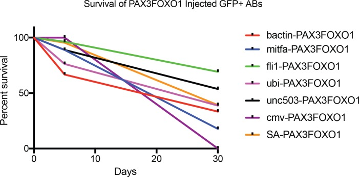 Promoter restricted expression of human PAX3-FOXO1 has different effects on survival in developing zebrafish. Shown are the survival curves for the following promoters and the total number of zebrafish embryos analyzed for each condition: beta actin ( n = 120), mitfa ( n = 45), fli1 ( n = 81), ubi ( n = 160), <t>unc503</t> ( n = 108), cmv ( n = 20), SA-splice acceptor ( n = 153).