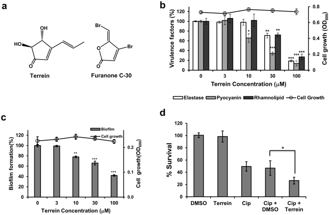 Effects of terrein on virulence factor production and biofilm formation. ( a ) Chemical structures of terrein and furanone C-30. ( b ) Effects of terrein on virulence factor production and cell viability in P . aeruginosa PAO1. PAO1 cells were grown in LB medium containing various concentrations of terrein for 24 h, followed by the measurement of cell density at 600 nm, elastase activity, pyocyanin, and rhamnolipid in the culture supernatants. ( c ) Effects of terrein on biofilm formation and cell viability in P . aeruginosa . P . aeruginosa biofilms formed in the presence of terrein for 9 h. The biofilm cells attached to the well surface were assayed using crystal violet staining. ( d ) Effects of terrein on the antibiotic tolerance of biofilms. Preformed biofilms (6-h) of PAO1 cells were treated with ciprofloxacin (Cip) alone or together with DMSO or 300 μM terrein for 3 h. The biofilms were dissociated from the wells by gentle sonication, and the bacteria were enumerated by plating. Three independent experiments were performed in triplicate, and the mean ± standard deviation (SD) values are displayed in each bar. * P