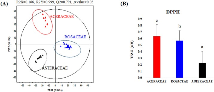 (A) Partial least-square discriminant analysis score plot based on UHPLC–LTQ-IT-MS/MS datasets, and (B) average antioxidant activity (2,2-diphenyl-1-picrylhydrazyl: DPPH), for the metabolite extracts derived from plant species belonging to the families Aceraceae, Rosaceae, and Asteraceae. The different letters are indicative of statistically significant differences for observed bioactivities according to Duncan's multiple-range test at p