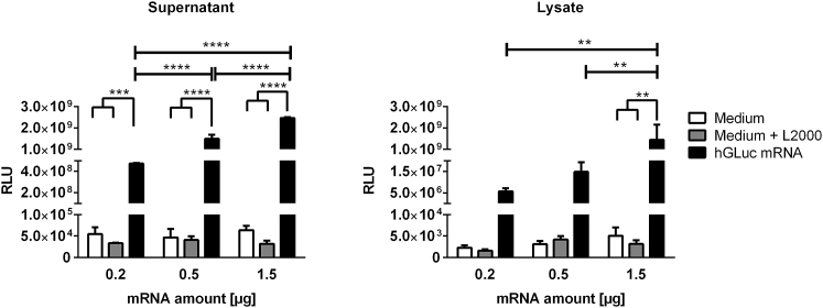 Detection of Luciferase Activity after Transfection of HEK923 Cells with Synthetic hGLuc mRNA 3 × 10 5 HEK293 cells were incubated for 4 hr at 37°C with 0.2, 0.5, or 1.5 μg mRNA complexed with Lipofectamine 2000. Then transfection complexes were discarded, and fresh medium was added to the cells. After 24 hr, the luciferase activity (RLUs) was detected in the supernatants and cell lysates. Cells treated with medium or medium and Lipofectamine 2000 (L2000) served as negative controls. Results are shown as mean ± SEM (n = 3). Statistical differences were determined using two-way ANOVA followed by Bonferroni's multiple comparisons test (**p