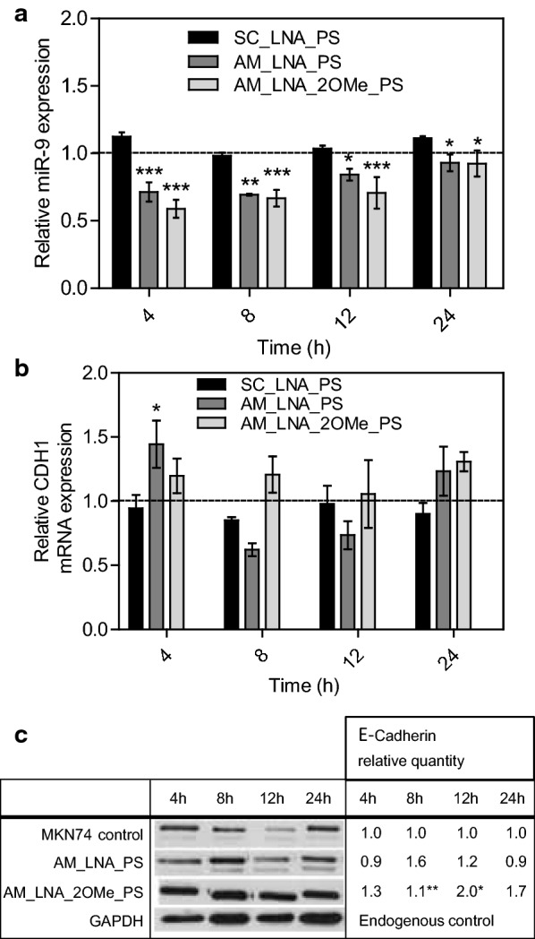 Silencing effect of the AMOs in MKN74 cells. Relative expression levels (measured by qRT-PCR) of a miR-9 and b CDH1 mRNA, after 4, 8, 12 and 24 h treatment with AM_LNA_PS, AM_LNA_2OMe_PS, and SC_LNA_PS. c Western blot analysis of the relative variation of E-cadherin expression in MKN74 cells after treatment with LNA-anti-miR oligonucleotides and the control, MKN74 cells without any treatment, at the same time-points used for qRT-PCR. All the qRT-PCR and western blot results were normalized against the MKN74 control and the levels of the respective endogenous control (RNU48 for miR-9 and GAPDH for CDH1 gene quantified by qRT-PCR and E-cadherin protein expression by western blot)