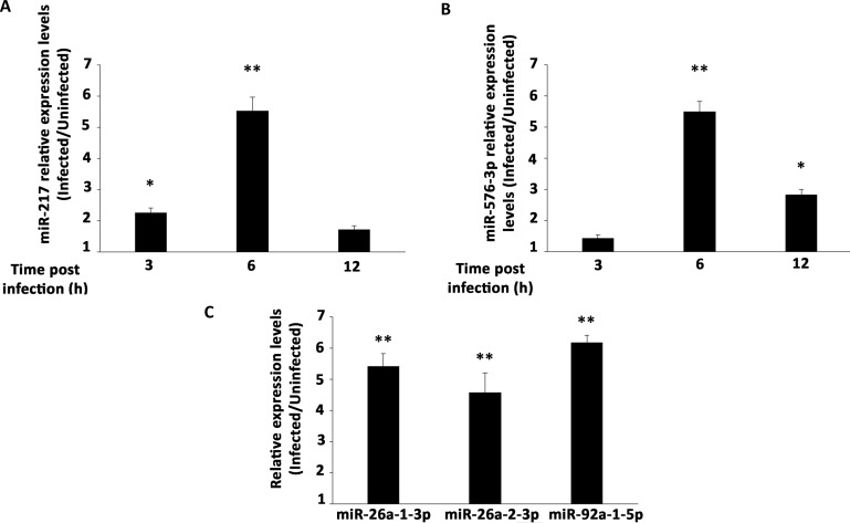 Validation of individual miRNAs expression. RT-qPCR with specific primers for individual miRNAs. Mean fold change of expression levels in OROV infected cells relative to uninfected cells for ( A ) miR-217 and ( B ) miR-576-3p. RT-qPCR was performed at 3, 6, 12 h post-infection. ( C ) RT-qPCR for miR-26a-1-3p, miR-26a-2-3p and miR-92a-1-5p was performed only at 12 h post-infection time point. MicroRNAs expression was normalized by U6 RNA endogenous levels. Error bars represent SD of triplicates of three independent experiments. Asterisks represent significant values compared to non-infected cells. * = p ≤ 0.05; ** = p ≤ 0.01.