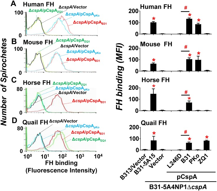 """CspA variants differ in their ability in promoting spirochetes binding to FH from different vertebrate animals. B . burgdorferi strain B31-5A15 (""""B31-5A15""""), B31-5A4NP1Δ cspA harboring the vector pBSV2G (""""Δ cspA /Vector""""), or this cspA mutant strain producing CspA B31 (""""Δ cspA /pCspA B31 """"), CspA PKo (""""Δ cspA /pCspA PKo """"), CspA ZQ1 (""""Δ cspA /pCspA ZQ1 """"), or CspA B31 L246D (""""Δ cspA /pCspA B31 L246D""""), or B313 carrying the vector pBSV2G (""""B313/Vector"""", negative control) was incubated with FH from human, mouse, horse, or quail. The bacteria were stained with a sheep anti-FH polyclonal IgG (for the spirochetes incubated with human, mouse, or horse FH) or a mouse anti-FH monoclonal antibody VIG8 (for the spirochetes incubated with quail FH) followed by an Alexa 647-conjugated donkey anti-sheep IgG or goat anti-mouse IgG prior to being applied to flow cytometry analysis. (Left panel) Representative histograms of flow cytometry analysis showing the levels of FH from (A) human, (B) mouse, (C) horse, or (D) quail binding to indicated B . burgdorferi strains. (Right panel) The levels of B . burgdorferi binding to FH from (A) human, (B) mouse, (C) horse, or (D) quail were measured by flow cytometry and presented as mean fluorescence index (MFI). Each bar represents the mean of three independent determinations ± SEM. Significant differences (P"""