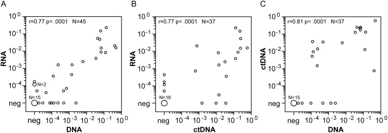 Comparison of quantitative NPM-ALK PCR results between cellular RNA, cellular DNA and cell free DNA Comparison of NPM-ALK copy numbers in blood or bone marrow samples from high risk ALCL-patients using the cellular RNA- and DNA-based and cell-free DNA-based methods. (A) Cell-based fusion transcripts (RNA) versus cellular fusion-sequence DNA-based (DNA), n=45. (B) Cell-based fusion transcripts (RNA) versus cell-free fusion-sequence DNA-based (ctDNA), n=37. (C) Cellular fusion-sequence DNA-based (DNA) versus cell-free fusion-sequence DNA-based (ctDNA), n=37.