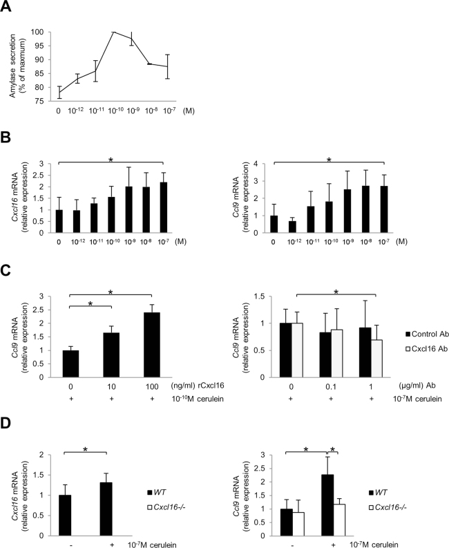 Expression of Ccl9 by pancreatic acinar cells. ( A ) Amylase secretion by the rat acinar cell line AR42J upon stimulation with various concentrations of cerulein. ( B ) Cxcl16 and Ccl9 mRNA expression by AR42J upon stimulation with cerulein. ( C ) Ccl9 mRNA expression of AR42J upon stimulation with cerulein (10 −10 M) in combination with various concentrations of recombinant Cxcl16 protein (left). Ccl9 mRNA expression of AR42J upon stimulation with cerulein (10 −7 M) in the presence of neutralizing anti-Cxcl16 Ab or control Ab (right). ( D ) Cxcl16 and Ccl9 mRNA expression by pancreatic acinar cells isolated from WT and Cxcl16 −/− mice upon stimulation with cerulein (10 −7 M). *p